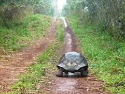 BLOG - Chroniques d'une femme-tortue