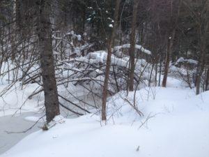 Le Québec en hiver - Le voyage intuition
