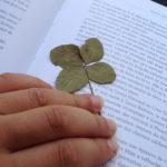 Quand les trèfles à 4 feuilles s'invitent en voyage
