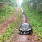 Chroniques d'une femme-tortue